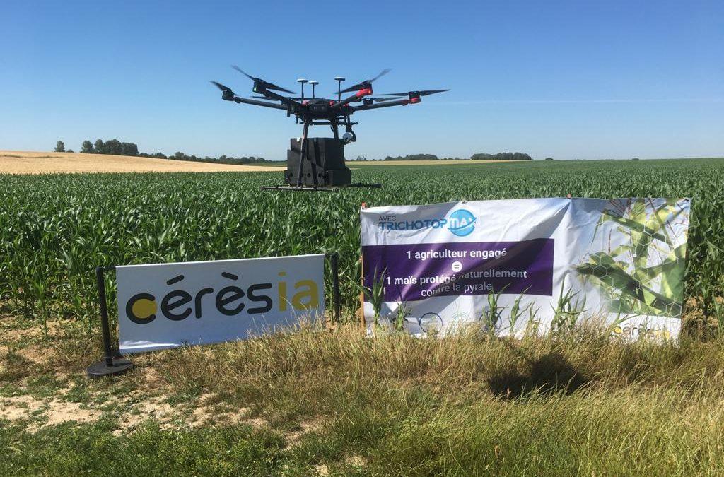 Tests épandage trichogrammes Tprotect Artech'drone
